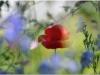 2012-07-21_15-35_dsc_6258