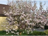 Klicka för att visa bilder: Blommor