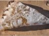 2011-02-20_dsc_4710