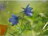2012-07-21_15-35_dsc_6255