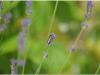 2012-07-22_17-31_dsc_6526
