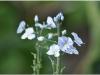 2012-07-22_17-35_dsc_6542