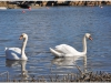 Fotograferad 2012-04-03 söder om Fredrikstad i Norge