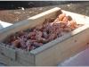 djur_2012-04-03_dsc_3764