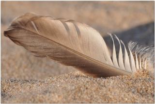 2012 fjäder i sanden